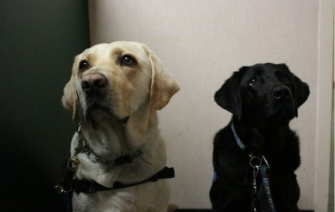 Service dogs offer help, awareness and education