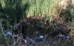 Waste in local rivers results in big environmental challenges